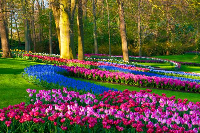 27 lugares para ver las mejores flores del mundo for Jardin keukenhof 2015