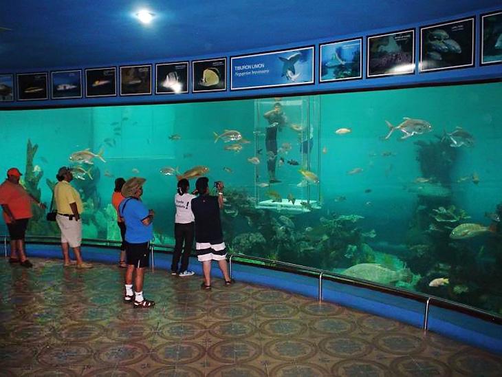 aquarium-mazatlan