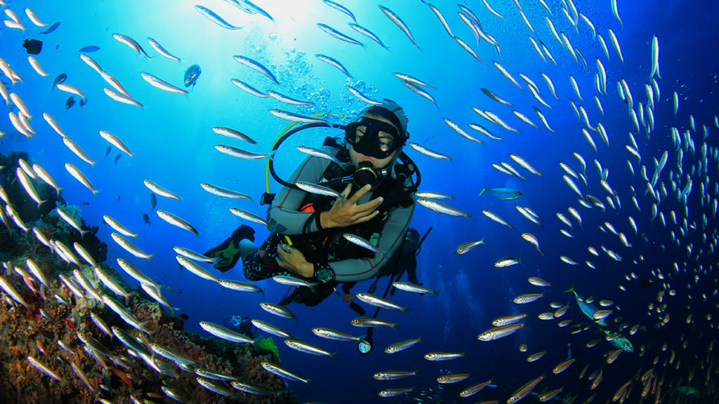 Cabos Buceo