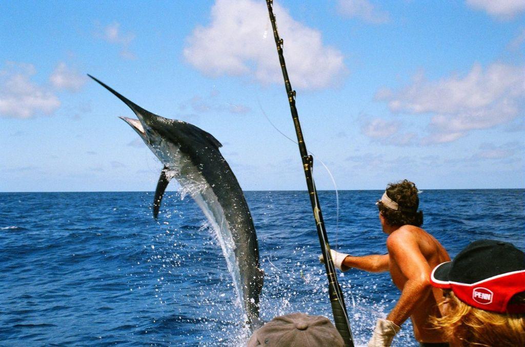 manzanillo pesca
