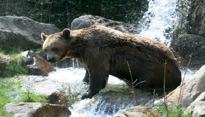 Vacaciones en Innsbruck, Zoo alpino